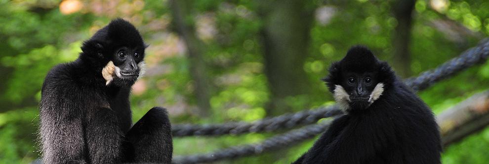 adresse zoo eberswalde